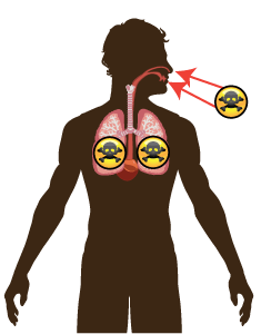 lungs and toxins